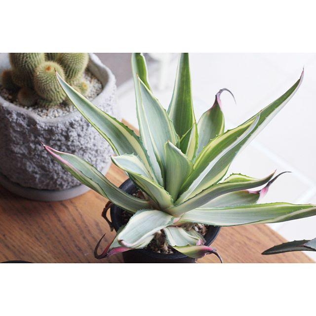 観葉植物特集9