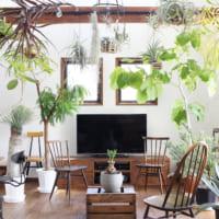 緑でいっぱいのお部屋にしたい!グリーンはどこに飾るべき?