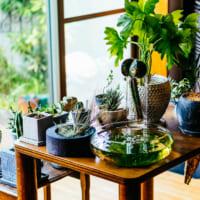 Tetsuさんの部屋に学ぶ、器と植物のマリアージュ