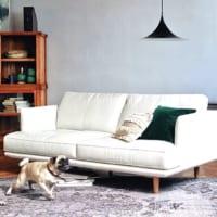 お気に入りのソファをみつけよう!素材とデザインのポイントをご紹介