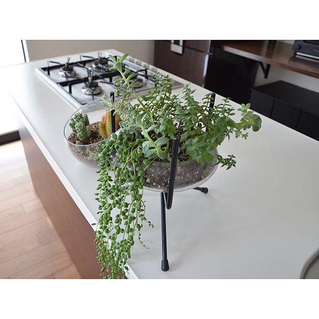 観葉植物特集50