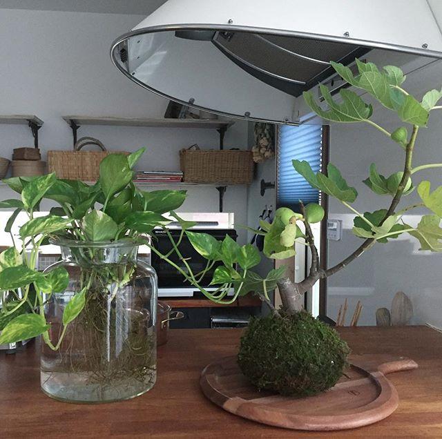 観葉植物特集42