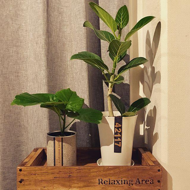 観葉植物特集10