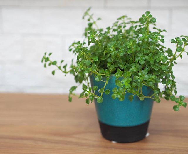 観葉植物特集7