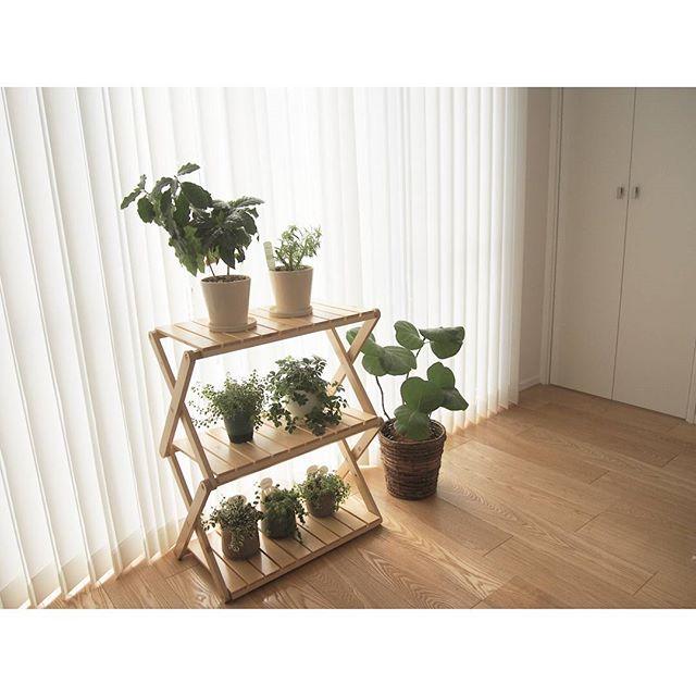 観葉植物特集47