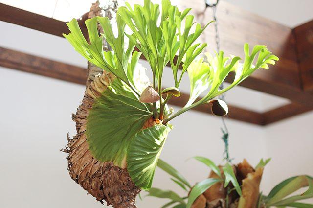 観葉植物特集27