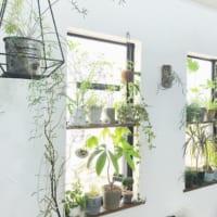 気軽に植物を楽しもう!花と緑を取り入れて暮らしに彩りを