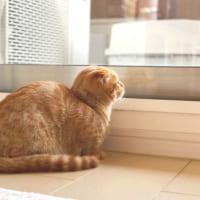 猫と暮らすインテリア♡室内飼いの猫と快適に過ごせるヒントやアイテムをご紹介!
