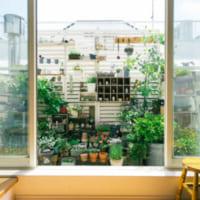 小さなスペースに豊かな世界が広がる、kokkomachaさんのベランダガーデニング