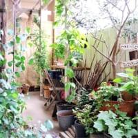 暑い日差しをシャットアウト!植物と天然素材を使って太陽光をさえぎろう♪