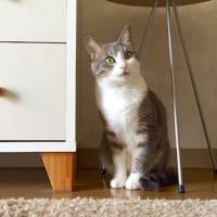 猫とインテリア特集!猫と楽しく暮らすインテリア&猫が快適に暮らせる工夫をご紹介♡