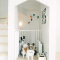 犬と暮らすインテリア実例集☆住まいを整えて快適な暮らしを楽しもう