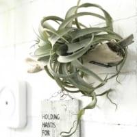 フェイクグリーンのおしゃれな飾り方特集♪本物に見える精巧な作りでお部屋をワンランクアップ!