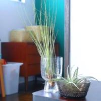 イッタラの「Sarjaton/サルヤトン」特集☆素敵なグラス&プレートで彩る食卓