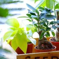 気の流れを良くしてラッキーに!風水に学ぶ、【金運】がアップする観葉植物8選☆