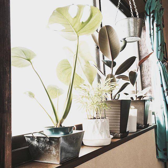 植物を印象的に取り入れるのがブルックリン風