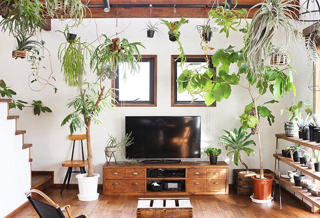 様々な形で観葉植物をディスプレイ