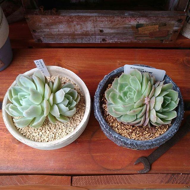 多肉植物3
