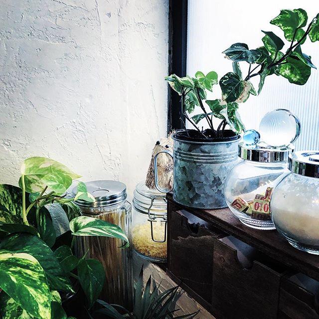 植物を印象的に取り入れるのがブルックリン風6