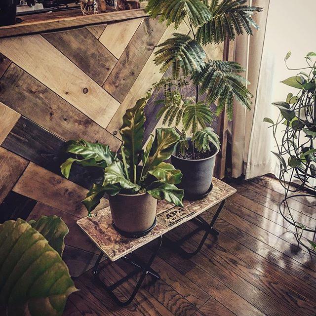 植物を印象的に取り入れるのがブルックリン風12