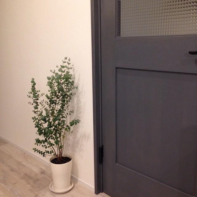 植物のある暮らし3