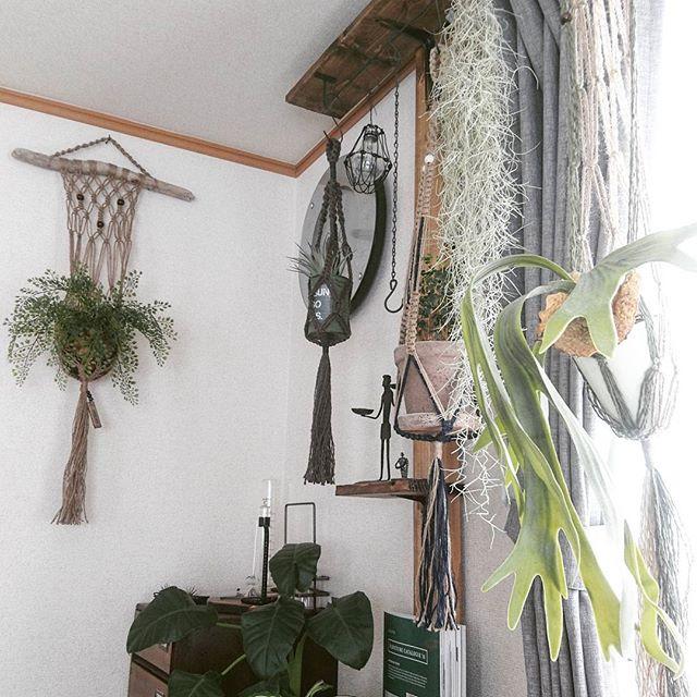 植物を飾る3
