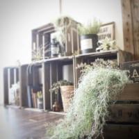 塩系インテリアでも緑がある生活を♡塩系にチョイスしたい植物をご紹介!