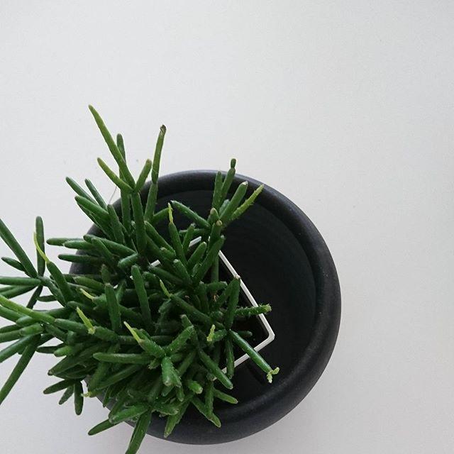 植物のある暮らし2