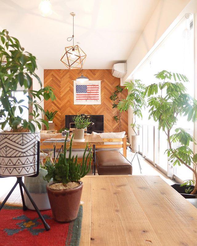 日当たりがよい部屋にシンボルツリーを設置