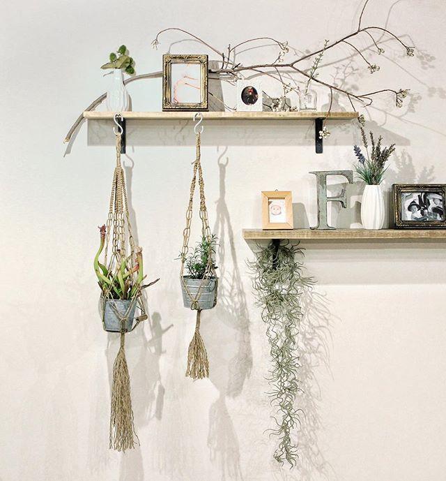 植物を飾る8