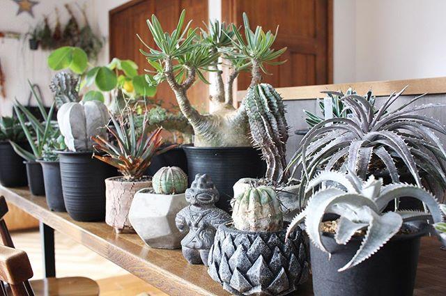 植物のある暮らし4
