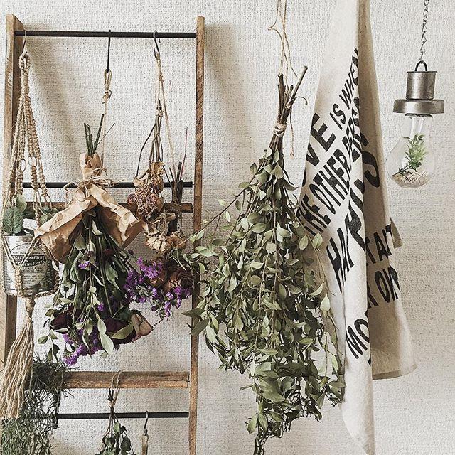 植物を飾る11
