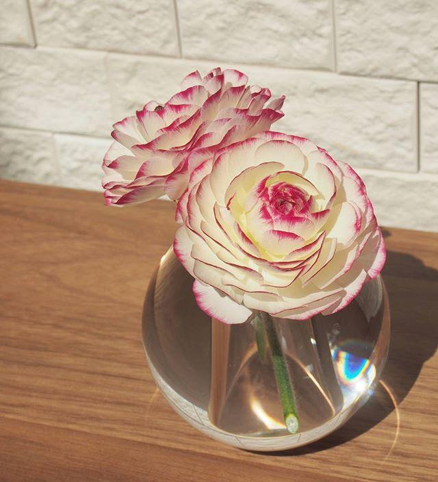 見栄えのする花2