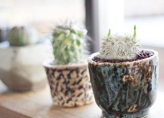 植木鉢や花瓶に陶器を使ってしまおう!