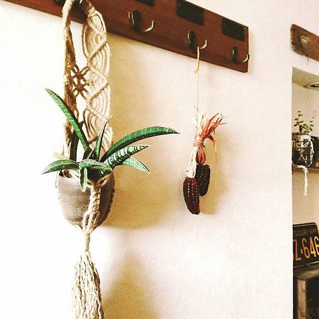 植物を飾る7