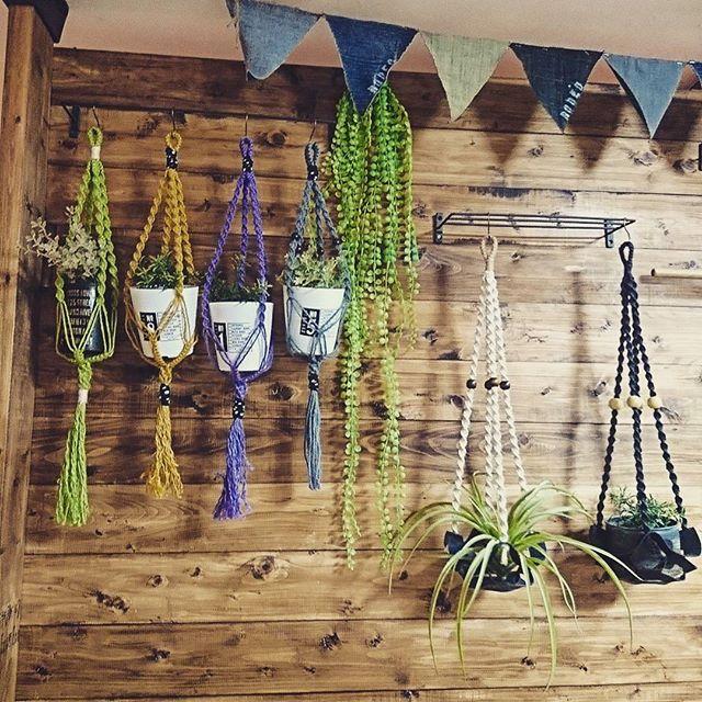 植物を飾る6