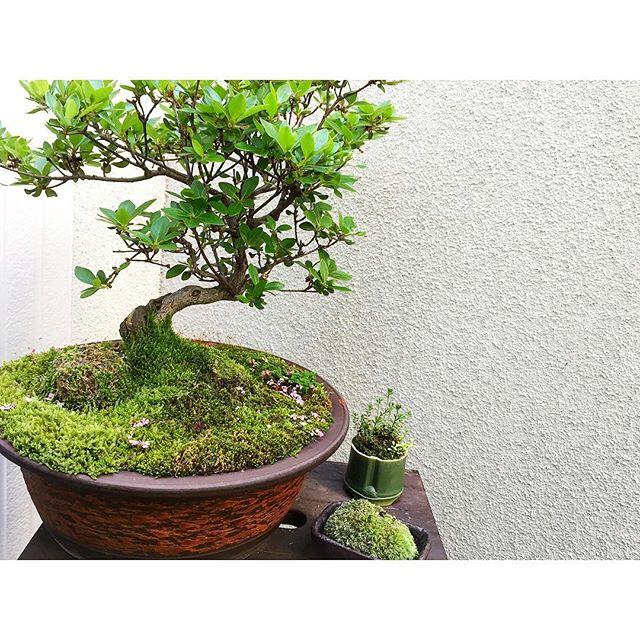 苔を使ったグリーンインテリア