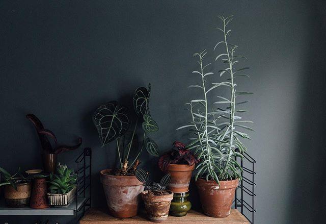 植物のある暮らし8