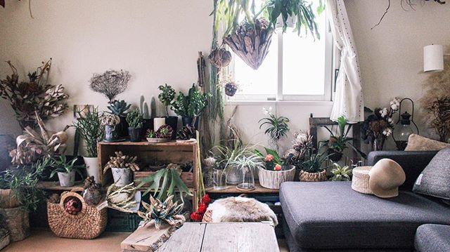 グリーンや植物でいっぱいのお部屋に