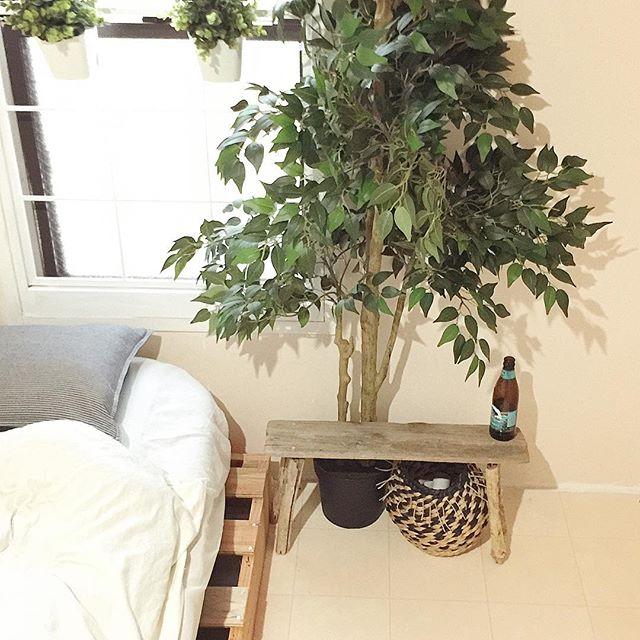 グリーンは自分と空気の癒しアイテム