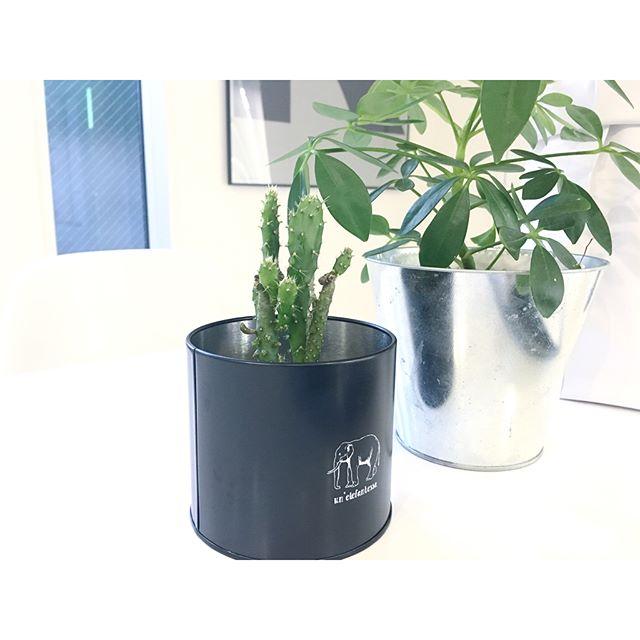 植物のある暮らし13