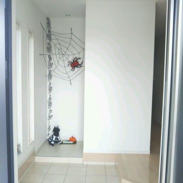 クモの巣をディスプレイ