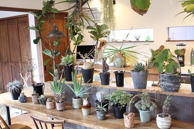 植物のある暮らし7