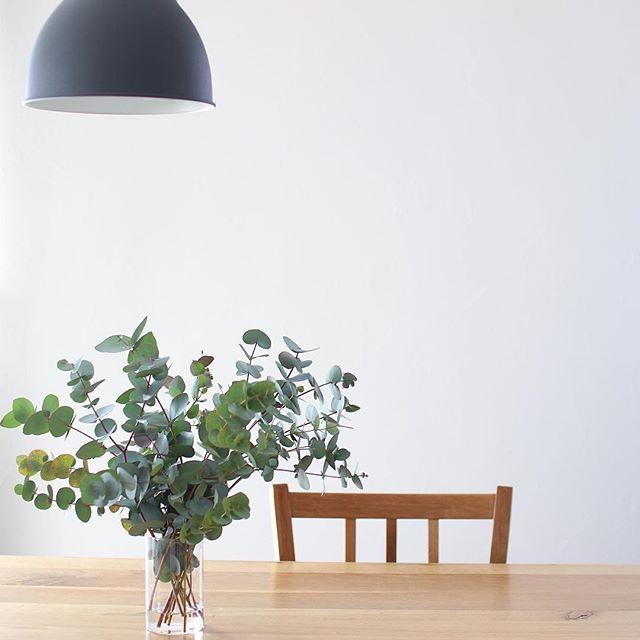 植物のある暮らし10
