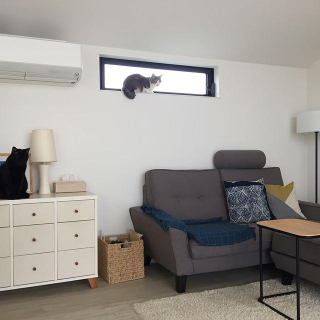 デザイン性のあるソファはお部屋のポイントに2