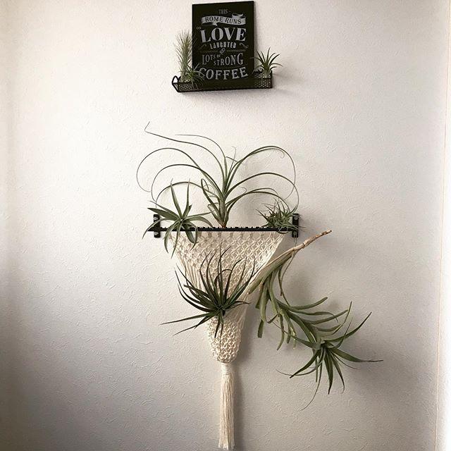 植物のある暮らし15