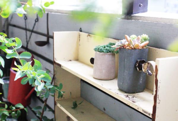 多肉植物を飾るグリーンポット