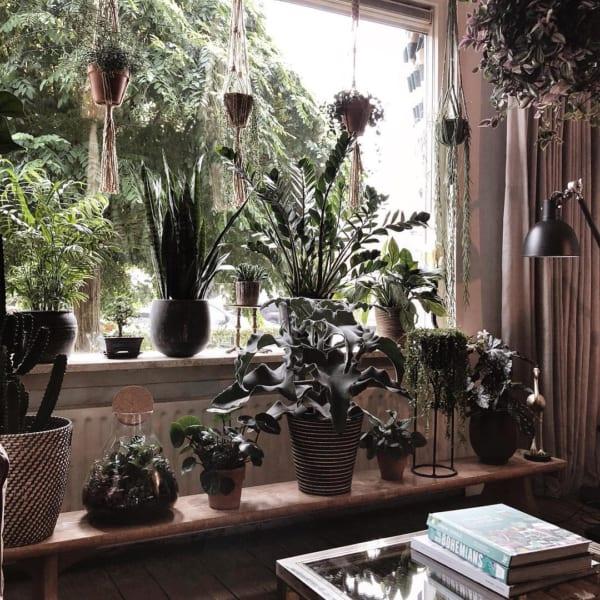 観葉植物を置いて出窓で育む8