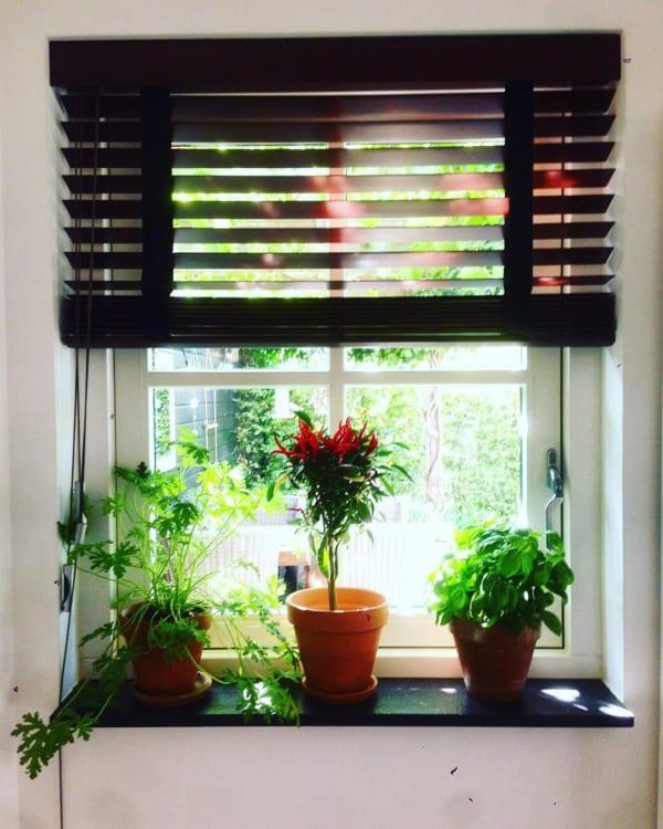 観葉植物を置いて出窓で育む9