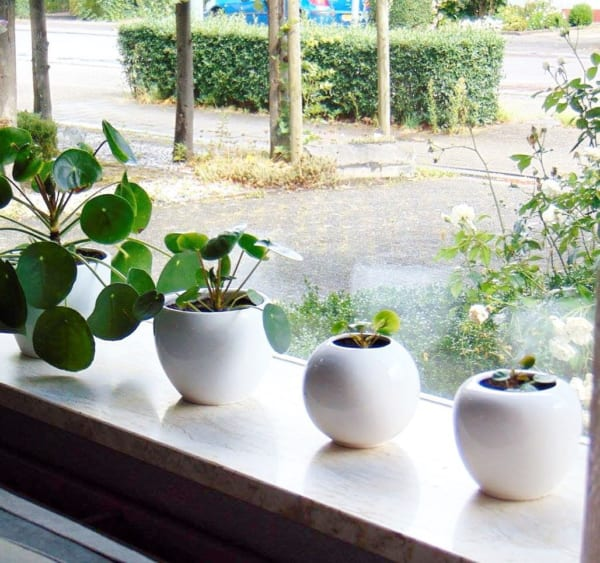 観葉植物を置いて出窓で育む10